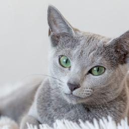 Разбираетесь ли вы в породах кошек?