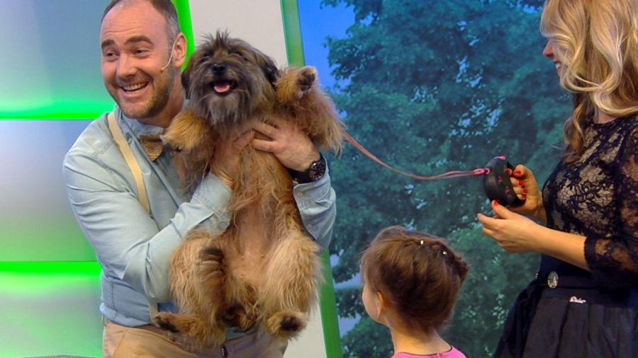 Хочу собаку!