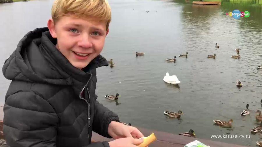 Чем кормить уток на пруду: что едят утки