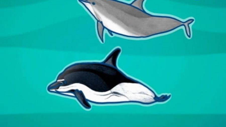 Выпуск 274 «Дельфины». Видео 3