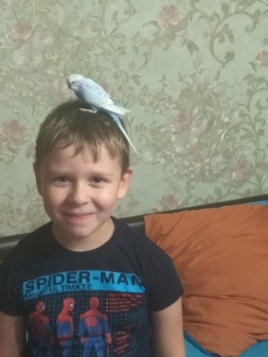 Ляпин Егор Павлович