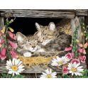 """Набор для раскрашивания ТМ Цветной """"Котята в гнезде"""", 50 х 40 см"""