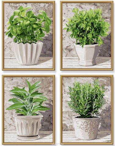 Schipper Картина по номерам Кулинарные травы в горшках 4 в 1