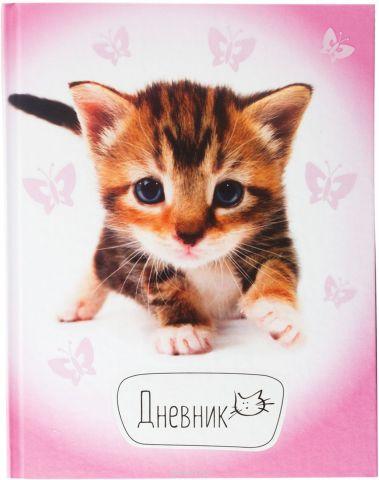 Brauberg Дневник школьный Котенок
