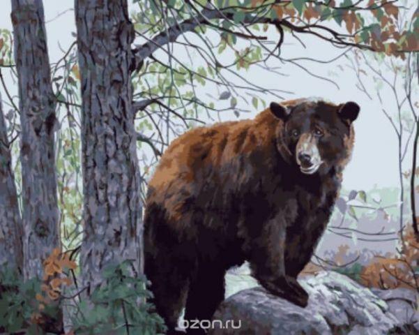 """Набор для рисования по номерам Цветной """"Бурый медведь"""", 50 х 40 см"""