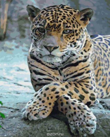 """Набор для раскрашивания Цветной """"Леопард со скрещенными лапами"""", 50 х 40 см"""